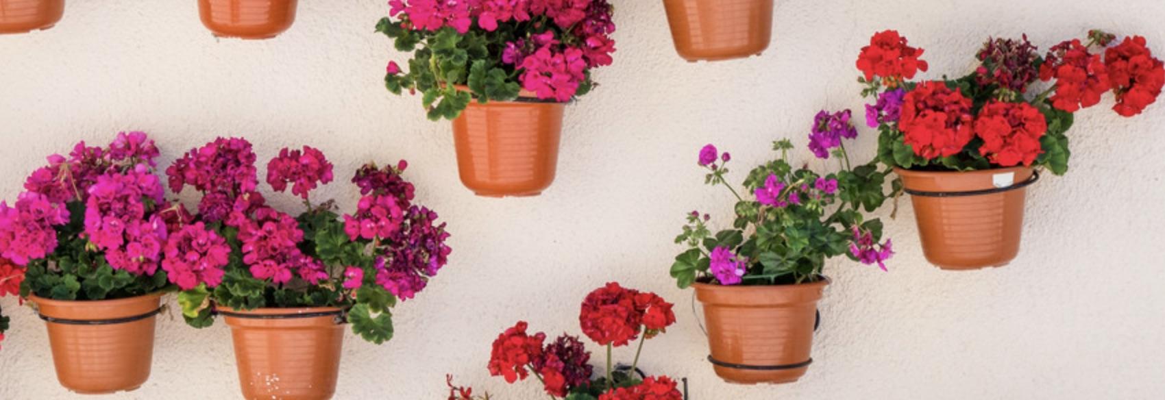 Ghivece și jardiniere