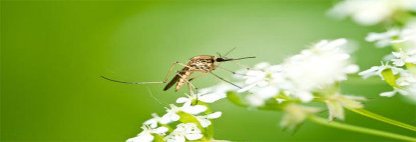 Solutii și Spray-uri anti-insecte